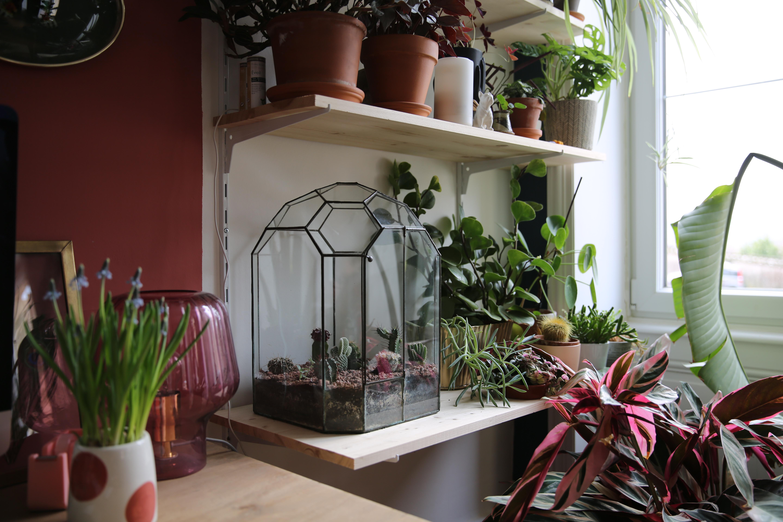 Realiser Un Terrarium De Cactus Le Blog Mode De Stephanie Zwicky